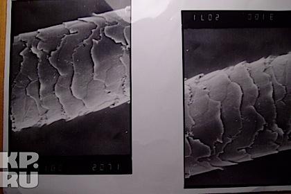 Под электронным микроскопом - волос снежного человека.