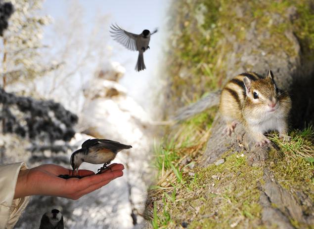 Чистейший воздух, насыщенный ароматами хвои, и маленькие обитатели леса - ручные бурундуки и птицы никого не оставят равнодушным.