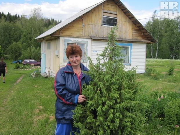 Наталья говорит, что можжевельник самый лучший очиститель воздуха, поэтому посадила целую посадку