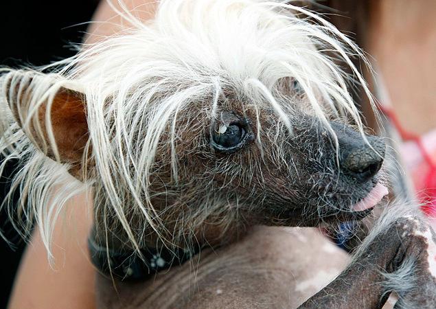 Победительница прошлого года - собака породы Китайская хохлатая.