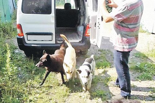 Пойманных псов Николай выпускает на волю. А заодно снимает на мобильник, чтобы в случае чего доказать защитникам животных, что он не убийца.