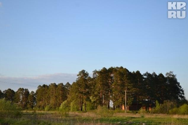 Памятник природы в селе Верховажье может перейти в частные руки