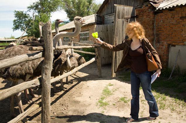 Страусы всегда радуются туристам ведь гости гости часто приносят угощения