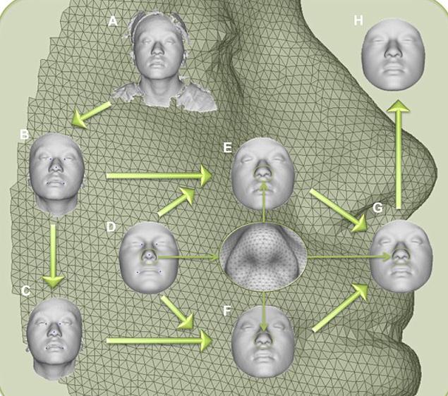 Компьютерная модель по разработанному алгоритму вычерчивает лицо сообразно генетическим особенностям человека