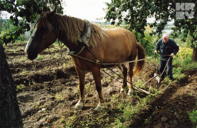 «Дядька Рыгор боялся, что конь его не выдержит»