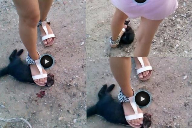 В Ростове ищут девушку, раздавившую беззащитного котенка 858022
