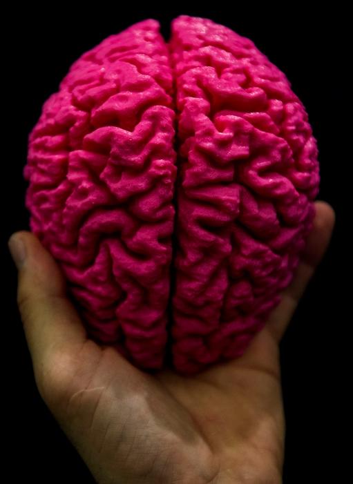 Десять удивительных фактов о нашем мозге