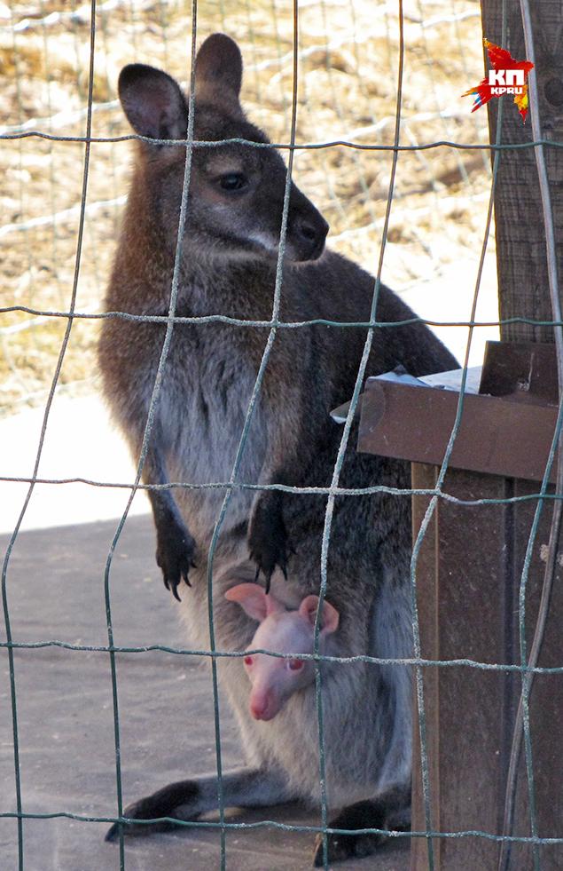 В Ярославском зоопарке самка
