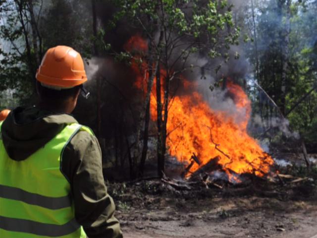 Нашествие жуков-короедов может привести к лесным пожарам