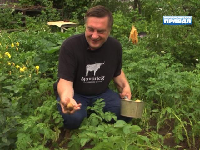 """""""Моя дача"""" с Андреем Тумановым: как правильно собирать картошку"""