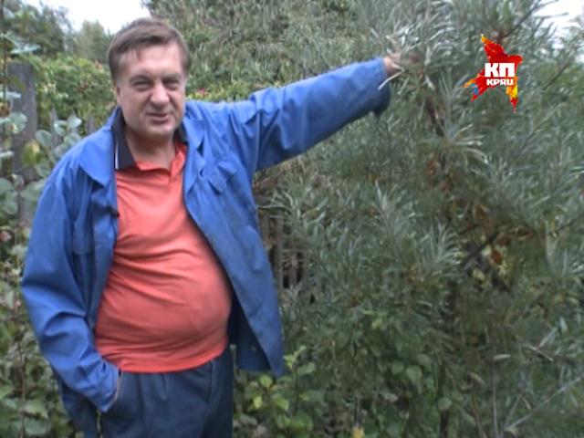 """""""Моя дача"""" с Андреем Тумановым: Снова про облепиху"""