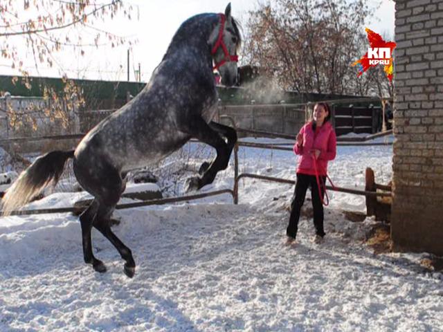 Здравствуй, лошадь, Новый год!