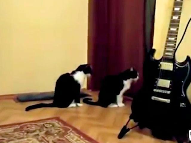 Милый котик попросил прощения