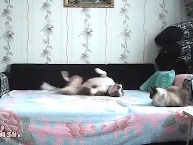 Что вытворяет пес, пока хозяйки нет дома