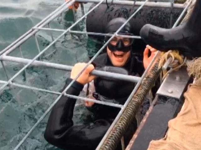 Как встретились Дмитрий Кохно и большая белая акула