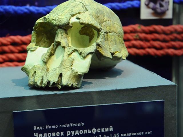 """В Биологическом музее им. Тимирязева открылась выставка """"10 черепов, которые потрясли мир"""""""