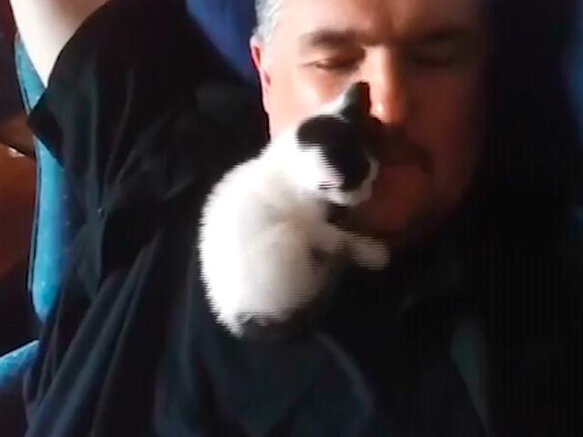Лучший друг котенка - бородатый человек