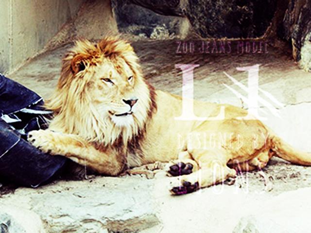 Тигры, львы и медведи создают новый дизайн джинс