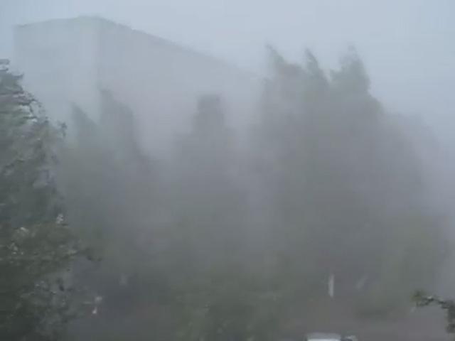 Стихия разбушевалась: Ураган в Городецком районе