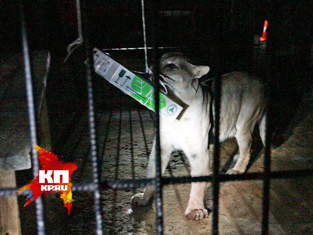 «Ночь в зоопарке» в Барнауле (август 2014 года)