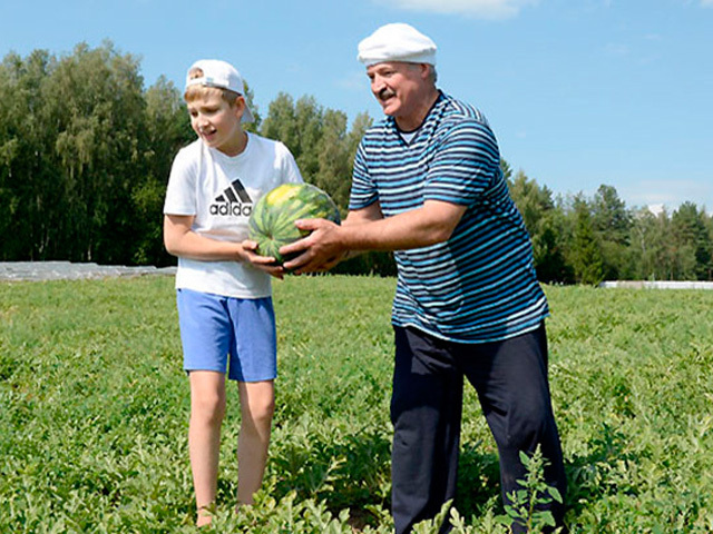 Лукашенко босиком собирал арбузы в своей резиденции в «Дроздах»