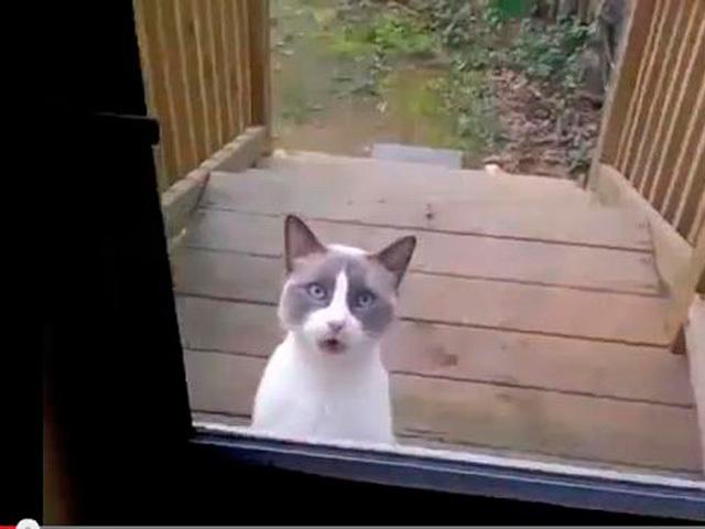Коту не понравилось, что его выставили на улицу, и он высказал хозяевам все, что о них думает