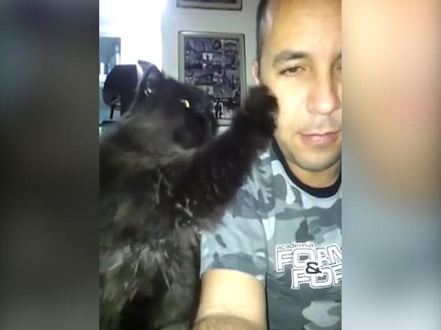 Любвеобильный кот требует больше ласки