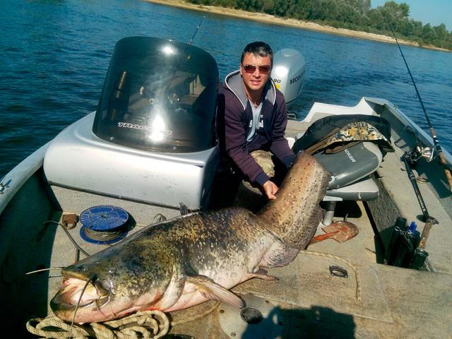 Гомельчанин словил 58-килограммового сома и выпустил его на волю
