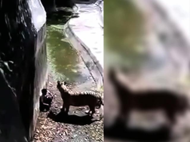 Тигр растерзал подростка на глазах посетителей зоопарка
