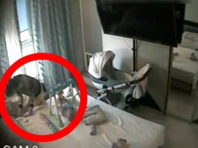 На видео попало, как домработница ворует у хозяев 250 тысяч рублей