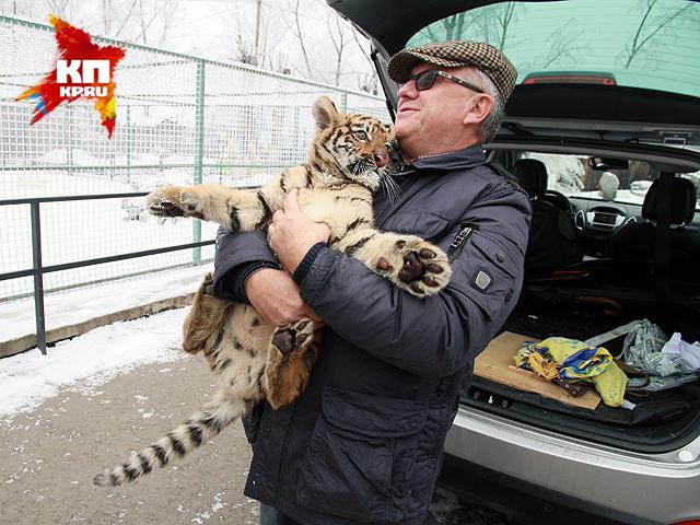 В Барнаульский зоопарк привезли тигренка Шерхана