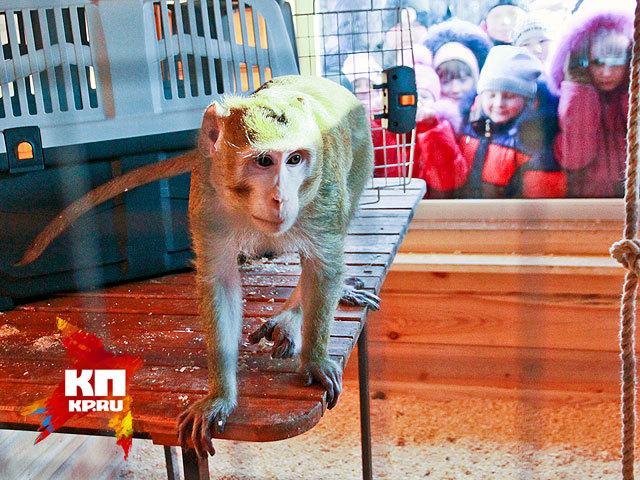 Макака Василий провел первый день в Барнаульском зоопарке (декабрь 2014 года)