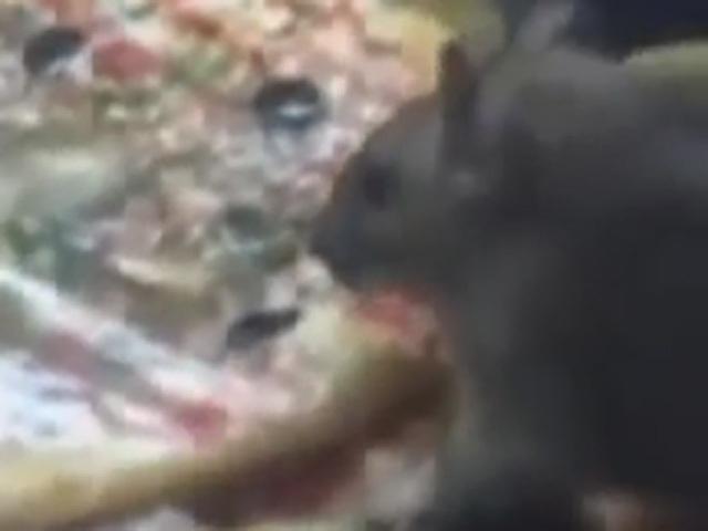 На автостанции в чебуречной крысы понадкусывали все чебуреки
