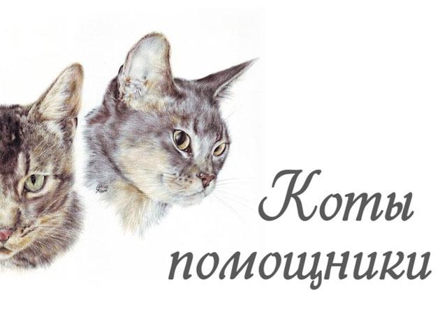Кот в доме хозяин... и помощник