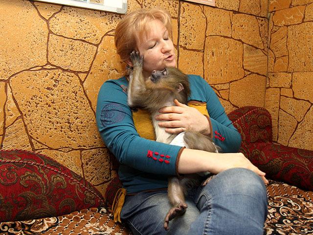 Экзотическая обезьяна мадрил по кличке Паку появилась в Иркутске
