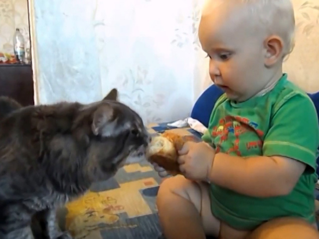 Улыбнитесь с нами! Кот и малыш: одна булка на двоих