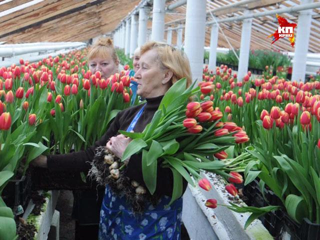 250 000 тюльпанов расцвели  на ВДНХ к 8 марта