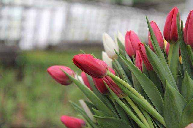Какие цветы подарить иркутянкам 8 марта
