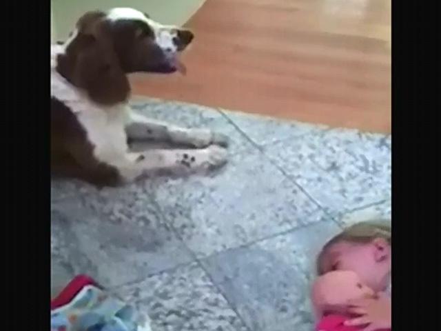 Собака знает, как успокоить ребенка