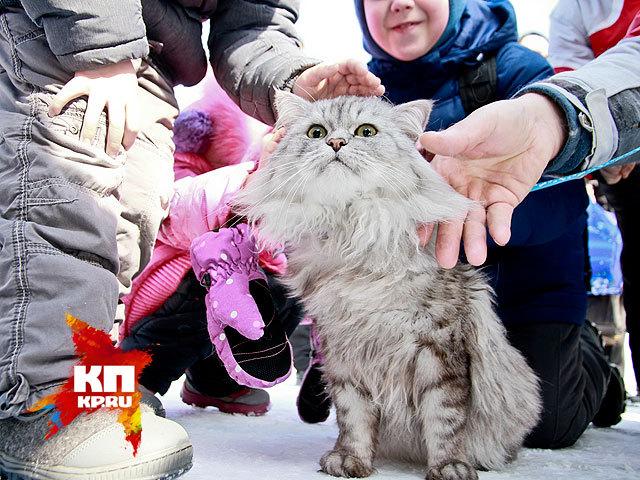 В Барнауле прошел праздник мартовских котов (14 марта 2015 года)