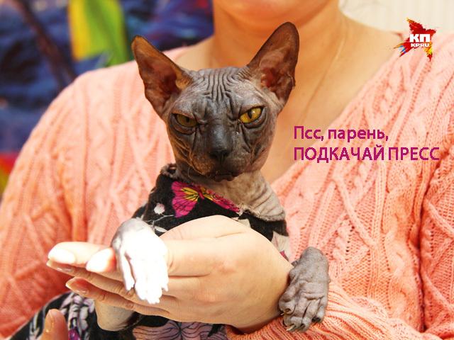 Нижегородская кошка-спортсменка тренируется на беговой дорожке
