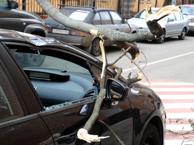 Сильный ветер обрушил дерево на автомобиль