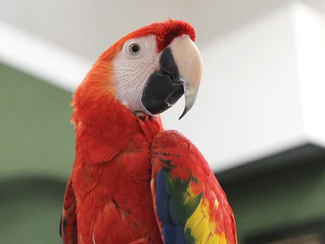 Выставка декоративных голубей,попугаев , канареек и певчих птиц