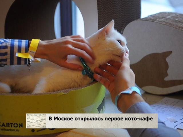 В Москве открылось первое кото-кафе