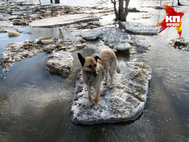 Река Барнаулка вышла из берегов