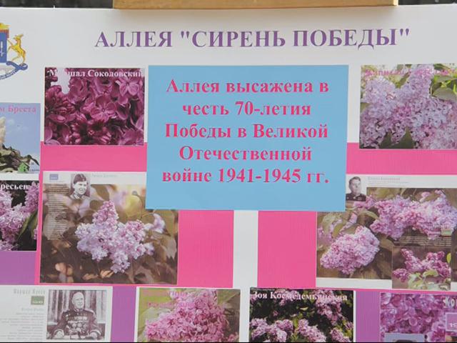 В Ботаническом саду заложили аллею «Сирень Победы»