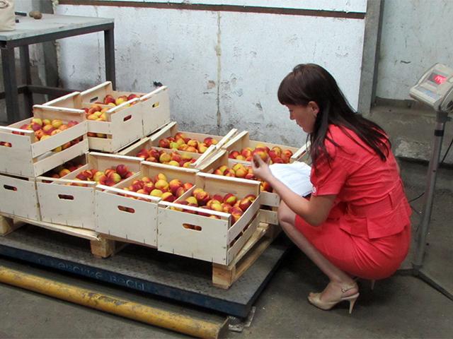 В Самаре уничтожили 120 кг санкционных нектаринов