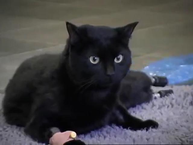 Бионический кот Оскар попал в Книгу рекордов Гиннесса дважды